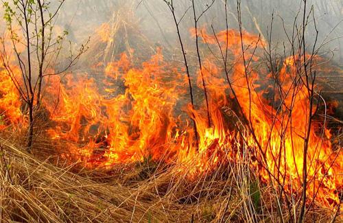 На Полтавщині відкрито сезон лісових пожеж