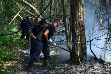 Паліїв лісу «на травневі» будуть карати, суворо карати