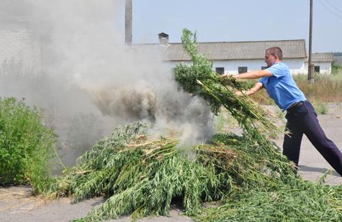 Фото сжигания конопли конопля выращивание дома гидропоник