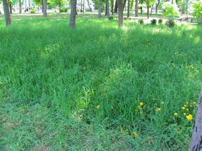 В Корпусном парке ещё можно увидеть высокую траву
