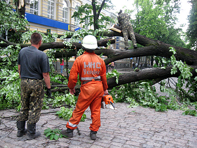 В Полтаве упавшее дерево нанесло ущерб городской казне