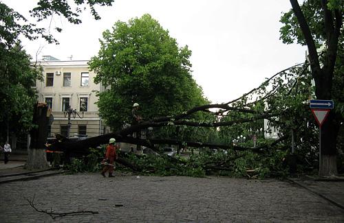 В центре города 100-летняя липа, которую сломало сильным шквальным ветром, частично перекрыла движен