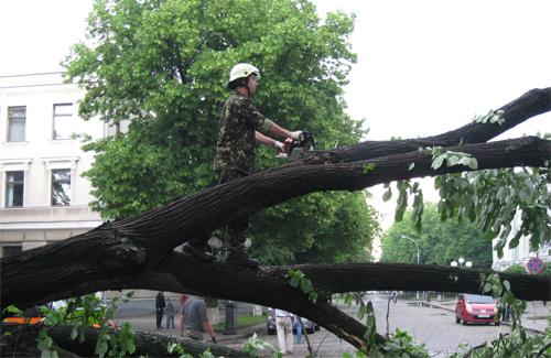 У Полтаві щороку ліквідують до 700 аварійних дерев