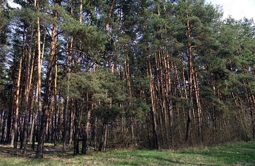 Нині у лісах Полтавської області оголошено 3-й клас пожежної небезпеки