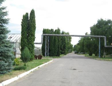 КП «Декоративные культуры» в Полтаве