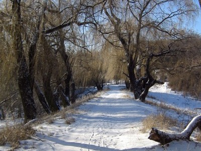Дендропарк взимку
