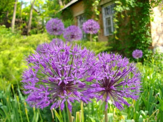 Ботсад квітує майже все літо