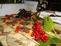Студенти експериментували із природними  фарбами, збираючи їх власноруч