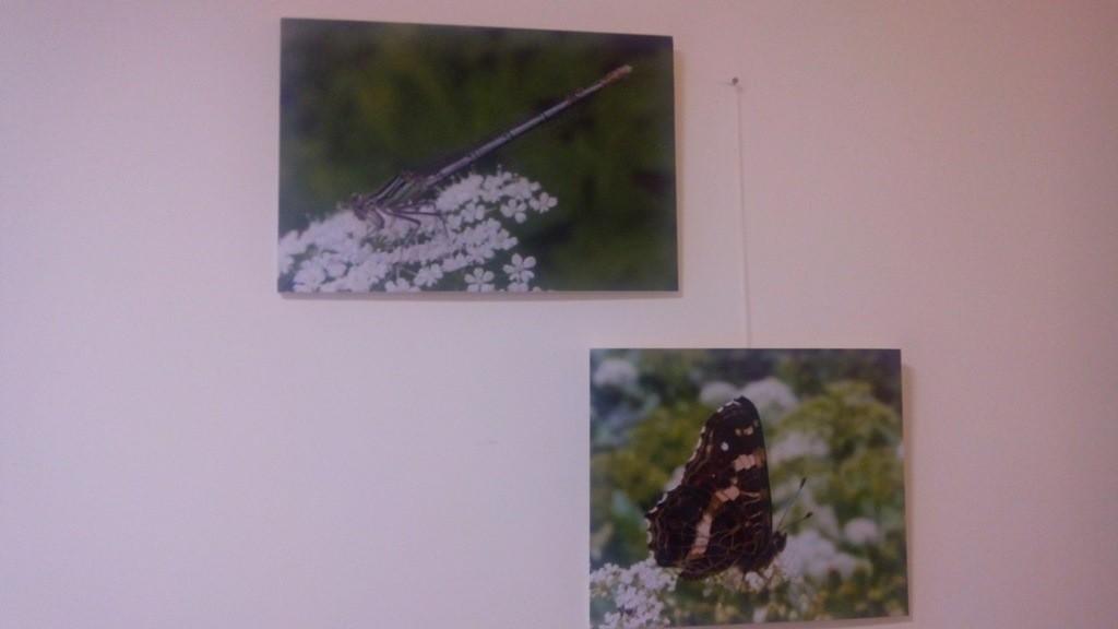 Фото комах