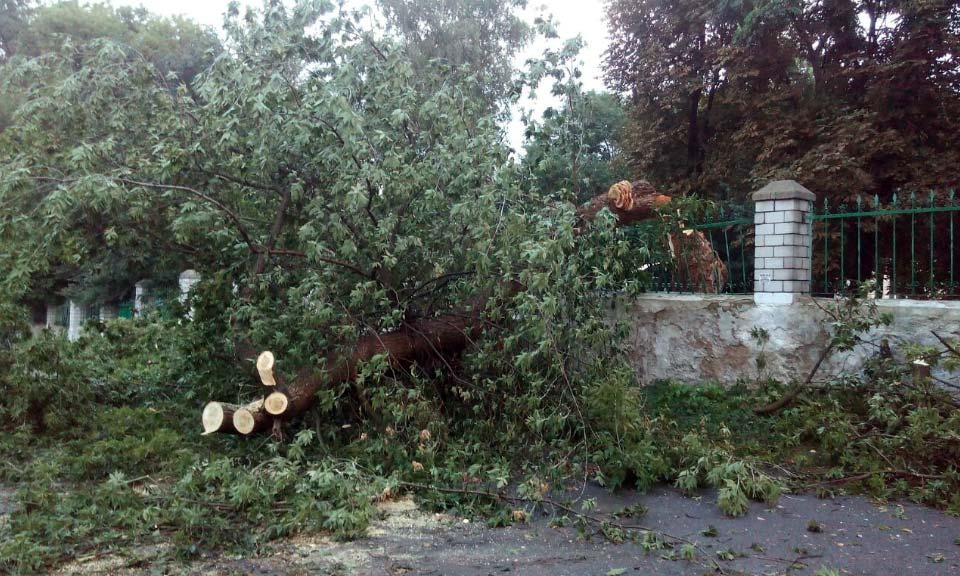 На проспекте Первомайском упавшая крупная ветка повредила забор возле центрального корпуса ПолНТУ.