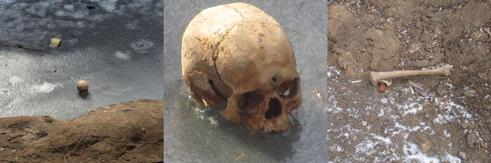 Кісти, які були знайдені під час каналізаційних робіт у 2013 році