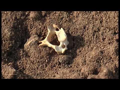 Навесні в Полтаві вимило людські останки