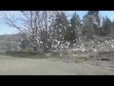 Розкидане буревієм сміття з Макухівського сміттєзвалища
