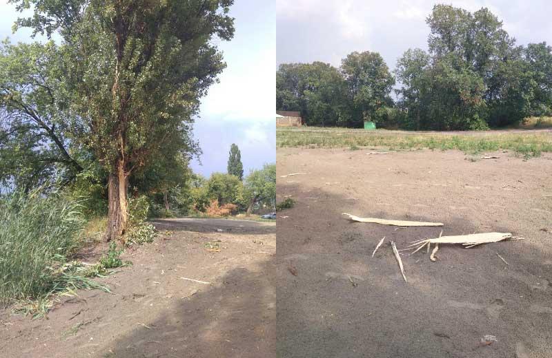 По словам свидетелей, под этим деревом во время грозы спряталась пострадавшая