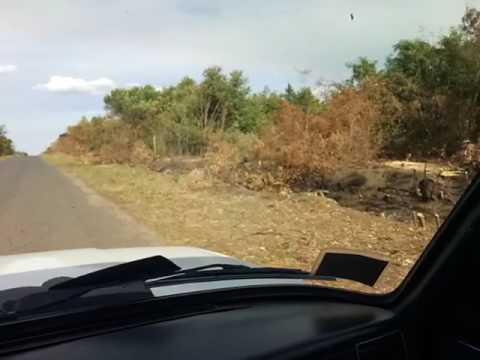 Незаконна вирубка дерев в Решетилівському районі (2017.07.19)