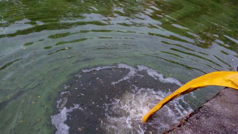 Зариблення Дніпра спільно з фахівціями рибпатруля