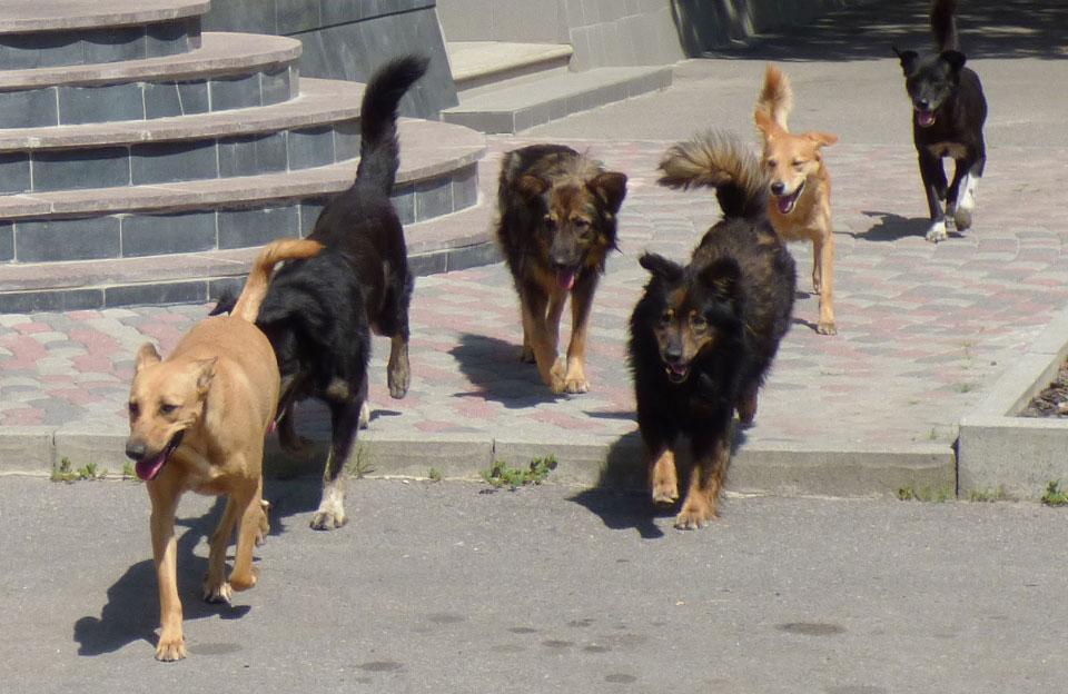Цигани разом із безпритульними собаками тероризують одну із шкіл міста