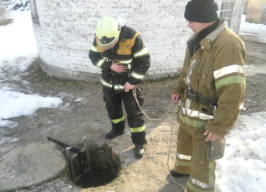 В Івано-Франківській області собака впала у відкритий колодязь. Щоб її витягнути довелось викликати надзвичайників