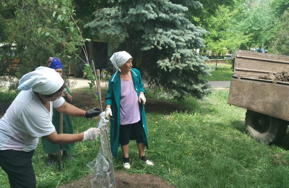 Садженці сакури висаджують у Сонячному парку