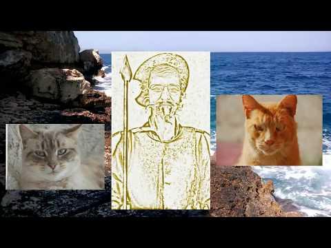 Кошка Коту не служанка 09 06 18