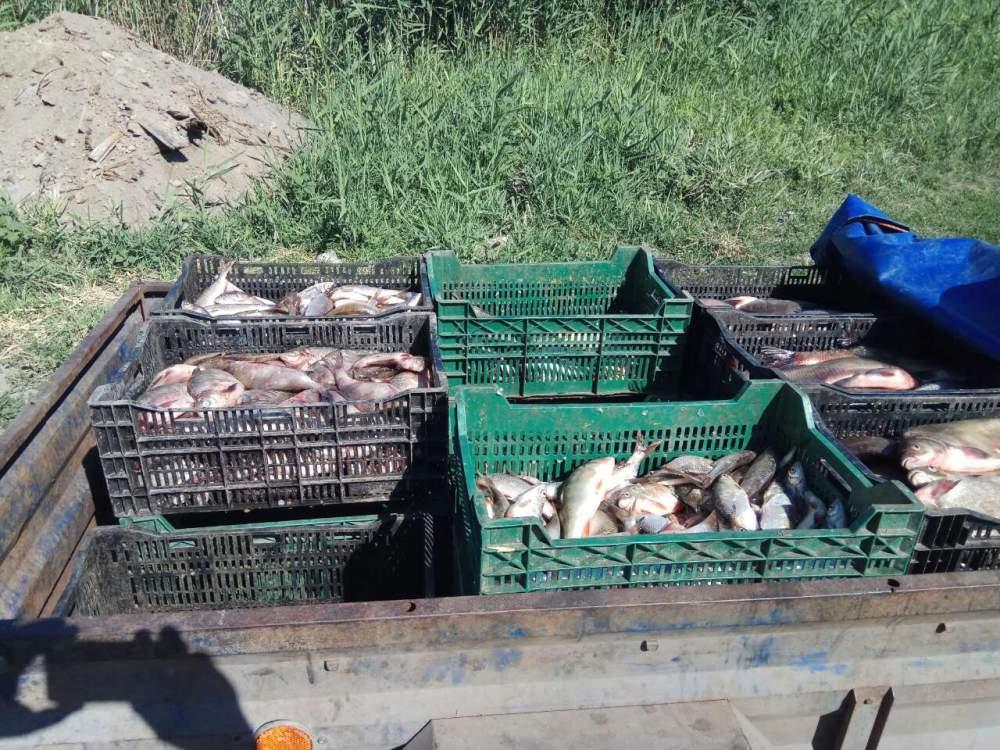 Незаконна скупка риби 18 червня