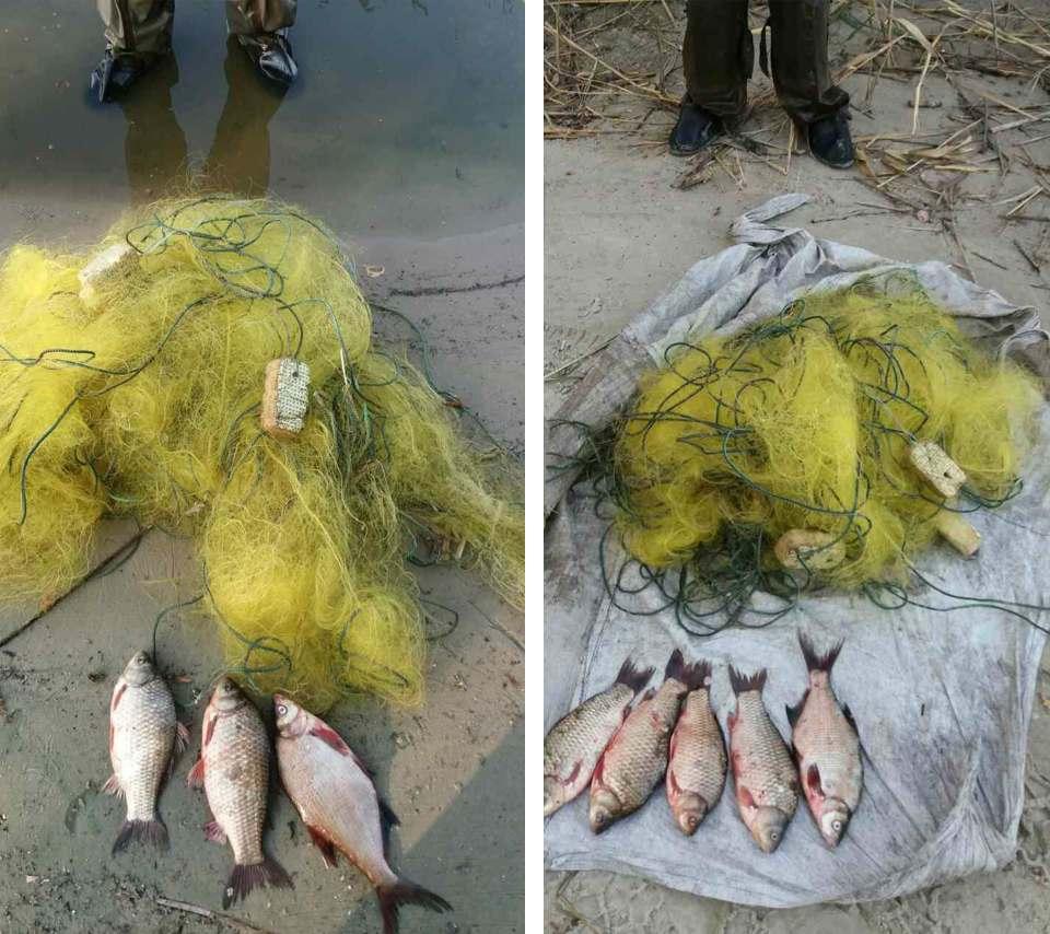 Мисинова сітка та виловлена риба