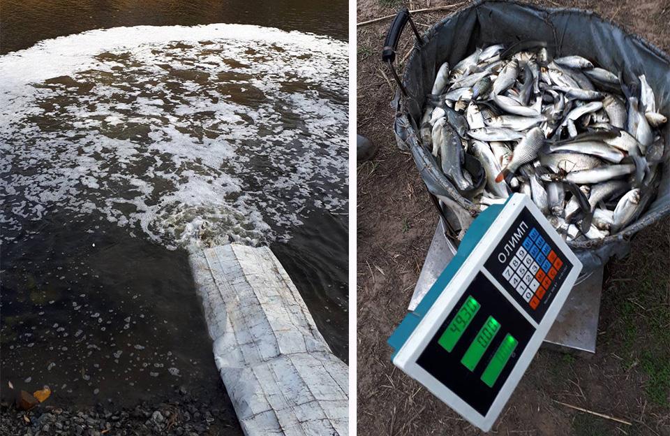 У річці Сула нові жителі — 4,5 тонн мальків риби
