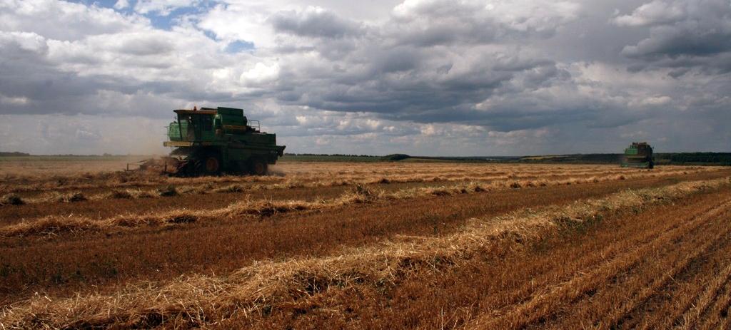 Органічне поле (джерело фото — agroecology.in.ua)