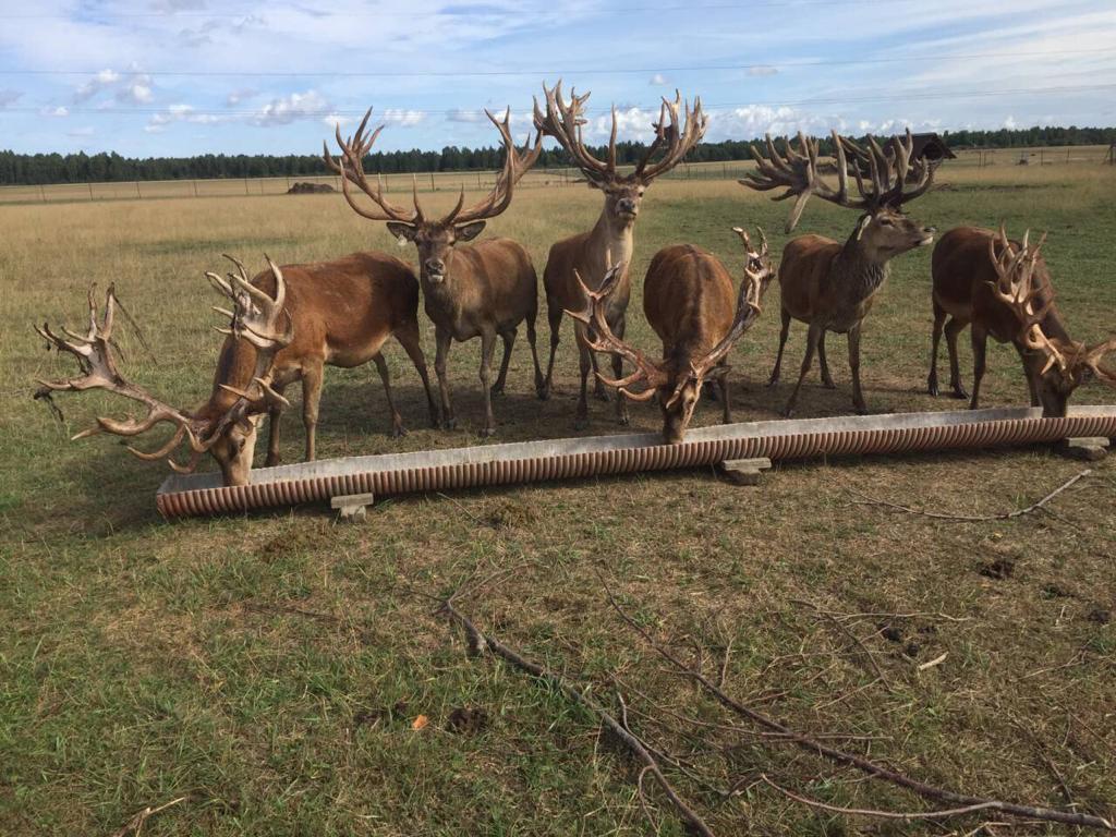 Відновлення благородних оленів на Полтавщині