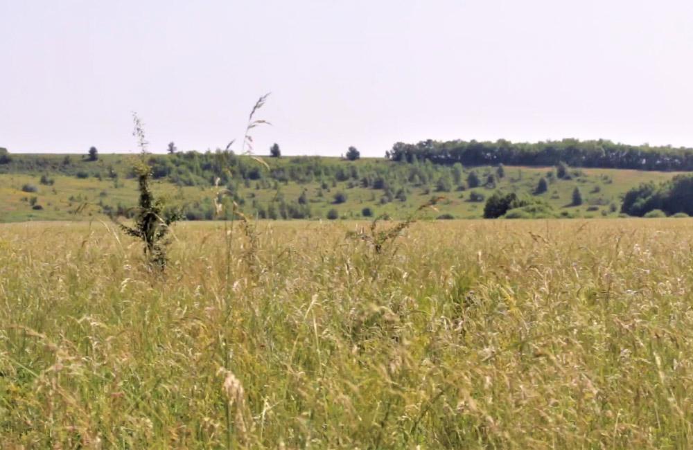 Території господарства в Диканському районі