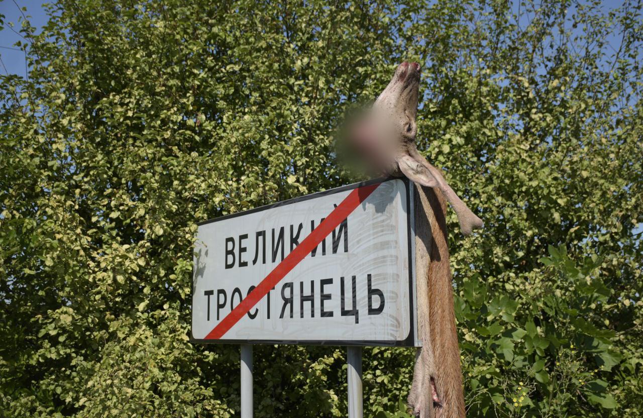 У Великому Тростянці поліція шукає браконьєрів, які вбили оленя і вивісили шкуру на вказівний дорожн