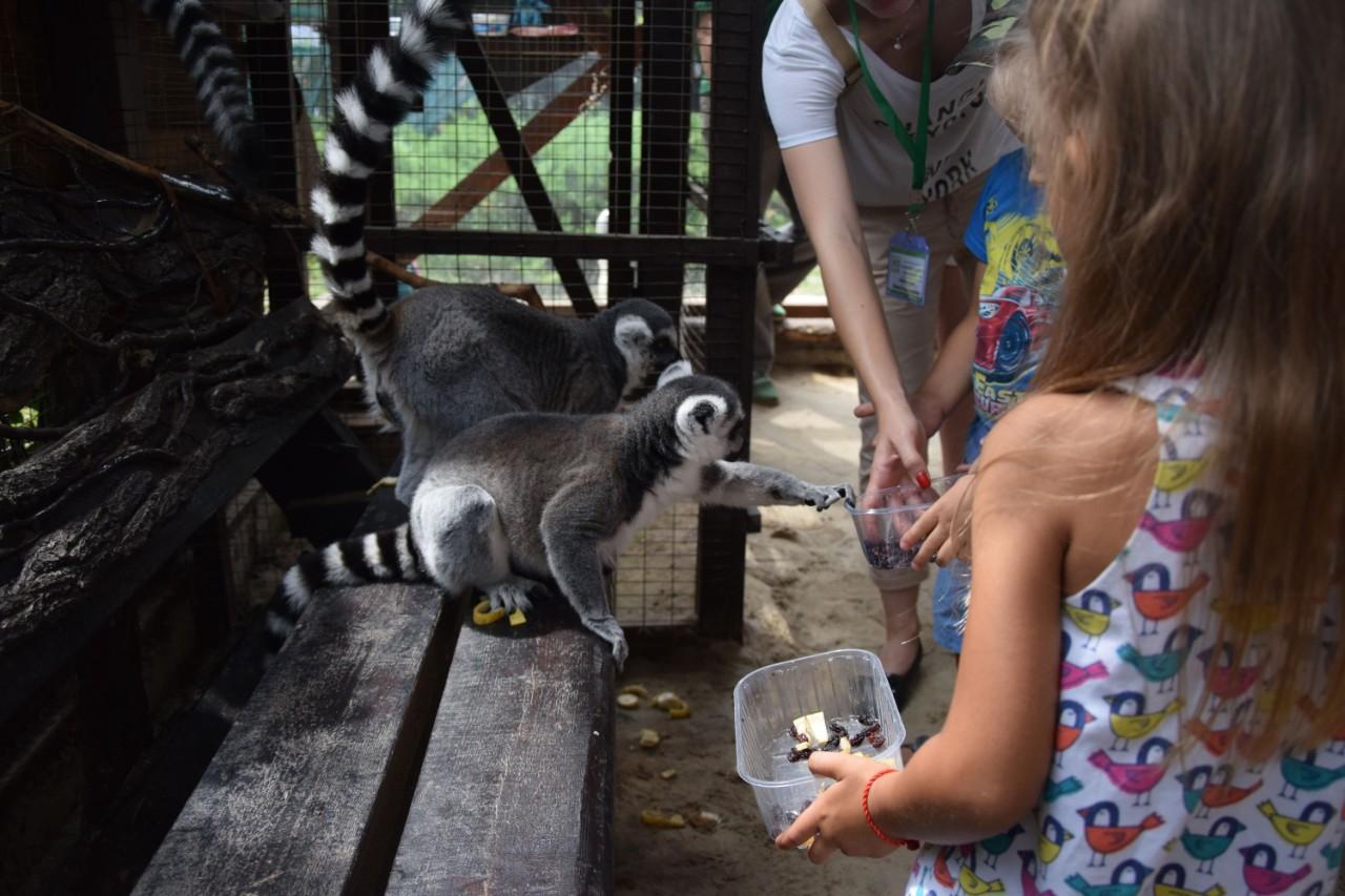 У контактному зоопарку можна було погодувати тваринок
