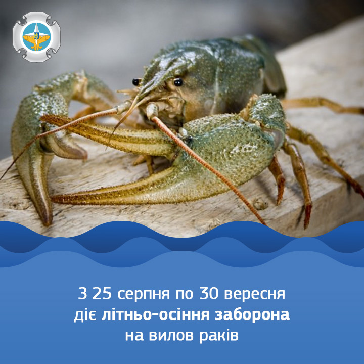 З 25 серпня до 30 вересня заборонено ловити раків