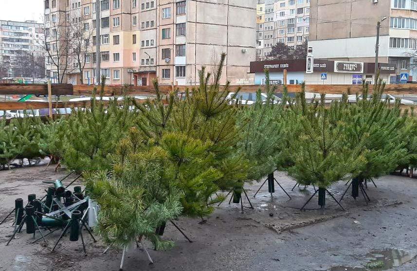 У мікрорайонах Полтави вже розпочався продаж новорічних ялинок