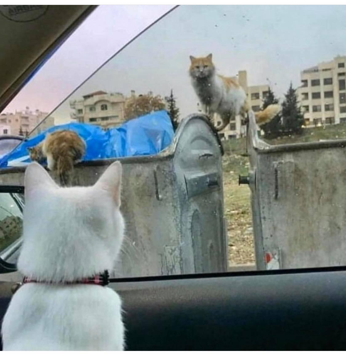Йдеш в магазин - погодуй по дорозі котів безхатьків.