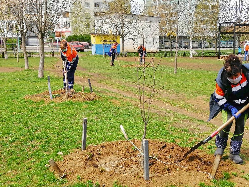 Тепер зелені насадження відновлюють в усіх мікрорайонах Полтави
