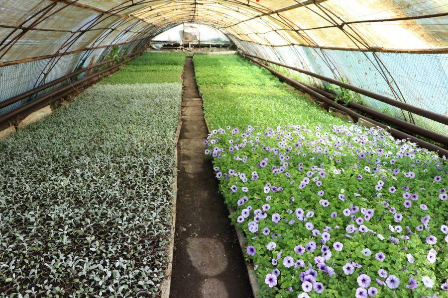 Нові квіти готові до висадки на нових клумбах