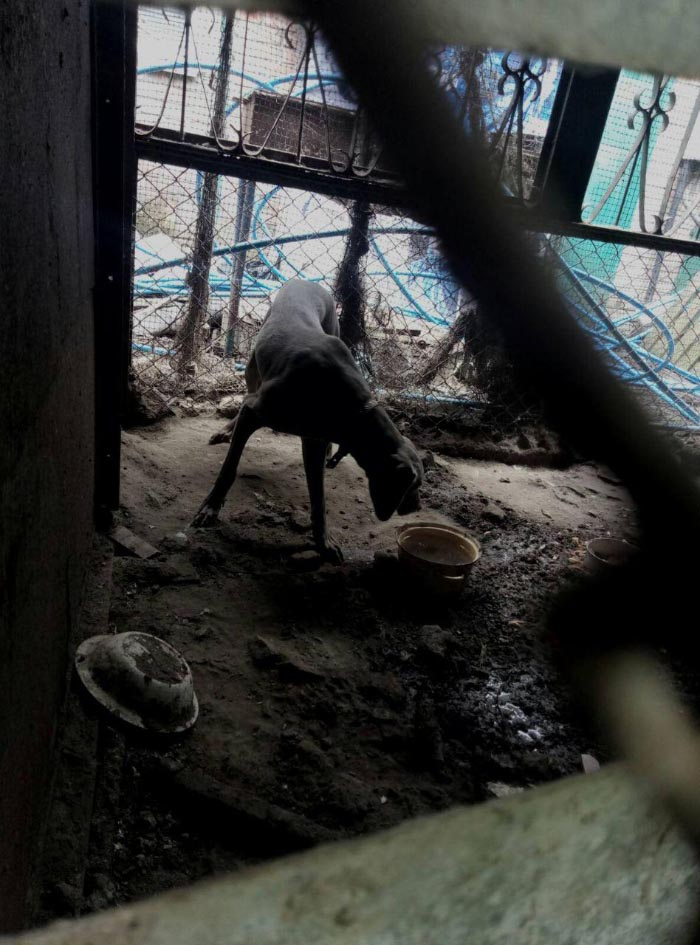 Собака, що оселилася замість кабана на скотному дворі Бажана