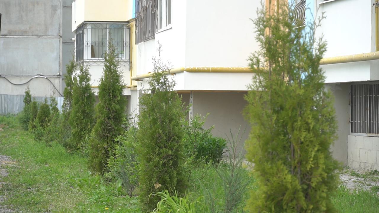 У громаді регулярно проводять озеленення