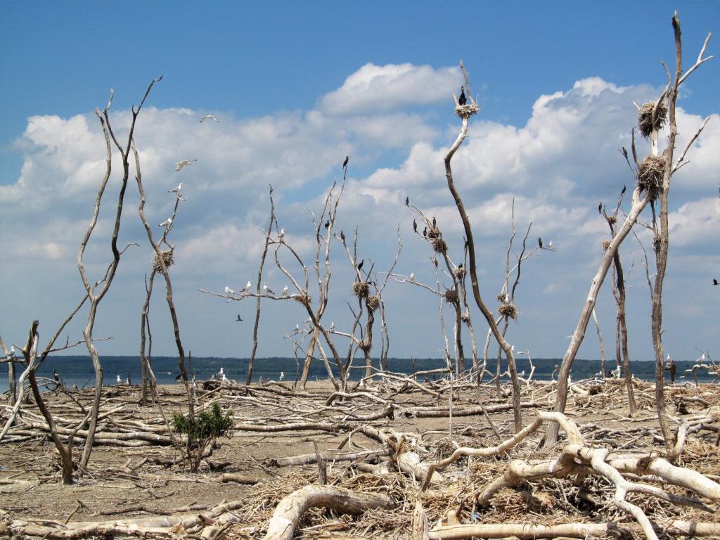 Острів Могила на Дніпрі