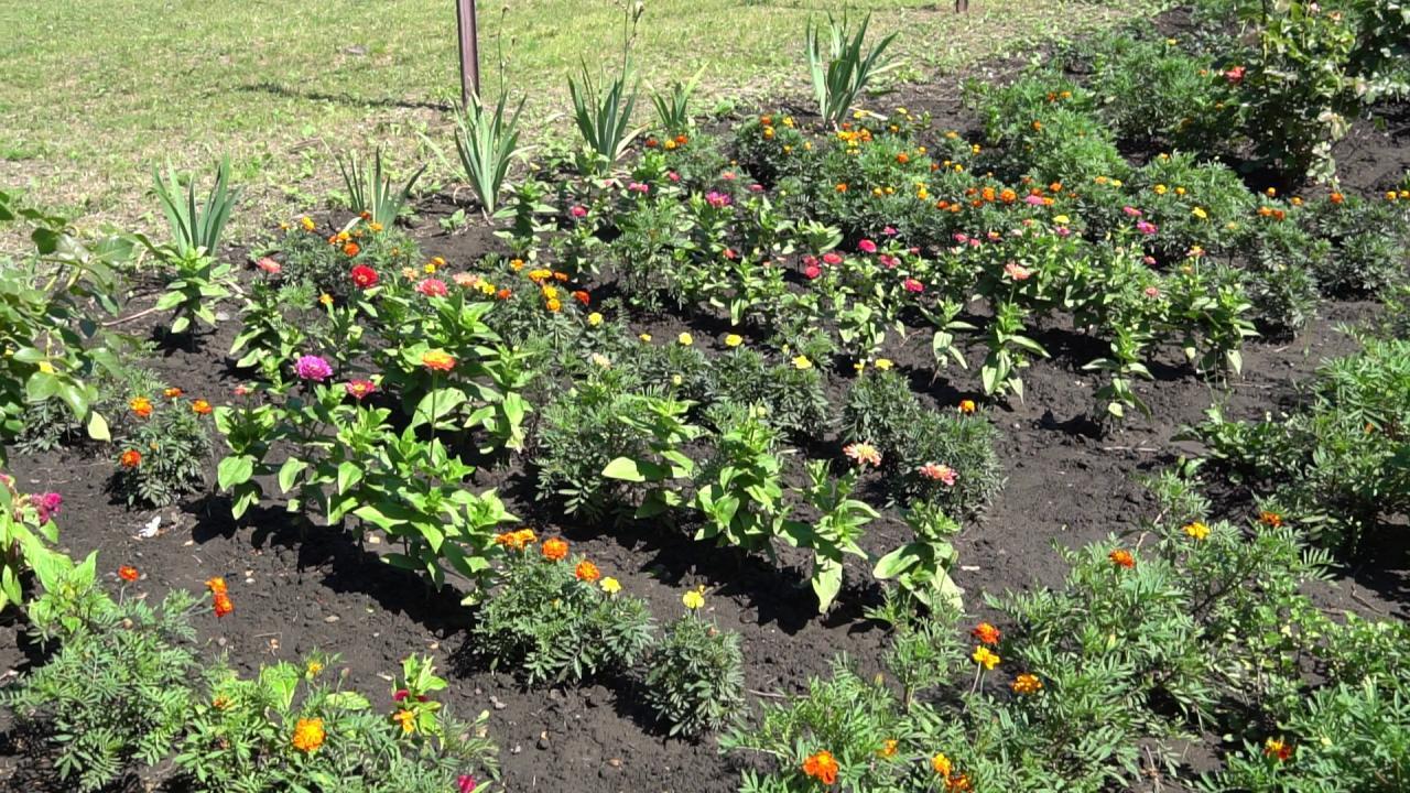«Полтавазернопродукт» придбала насіння квітів для школи