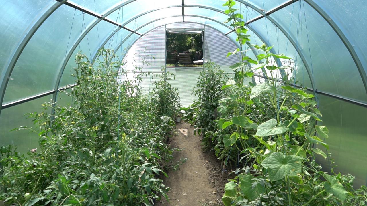 У теплиці  від компанії «Полтавазернопродукт» ростуть різні овочі та трави