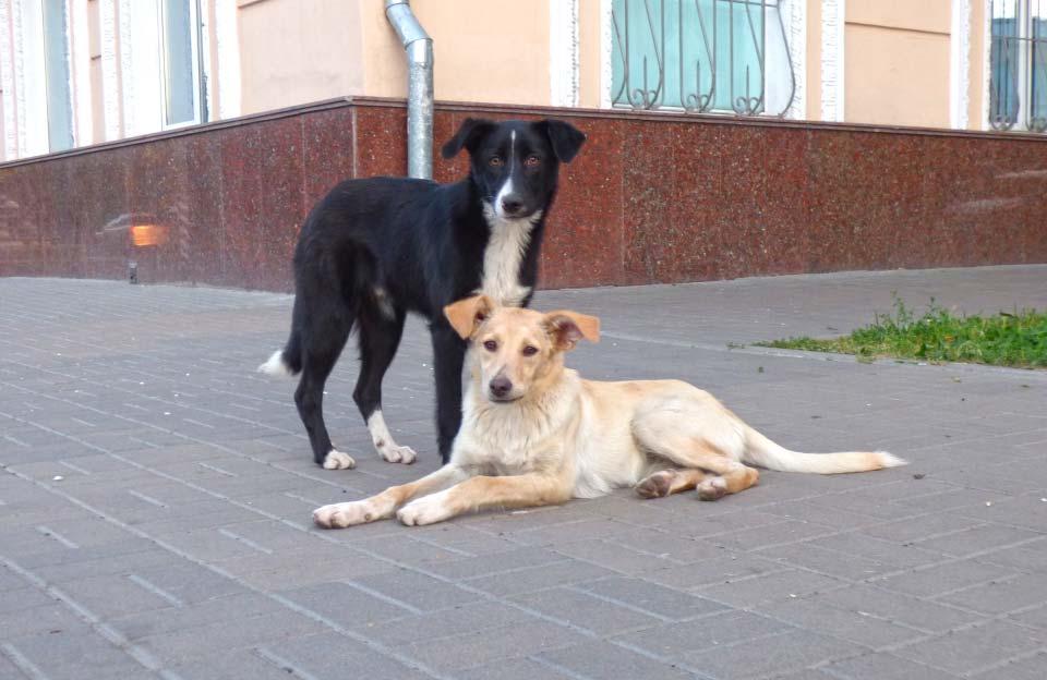 Станом на кінець 2019 року у Полтаві налічувалося близько 3800 безпритульних собак