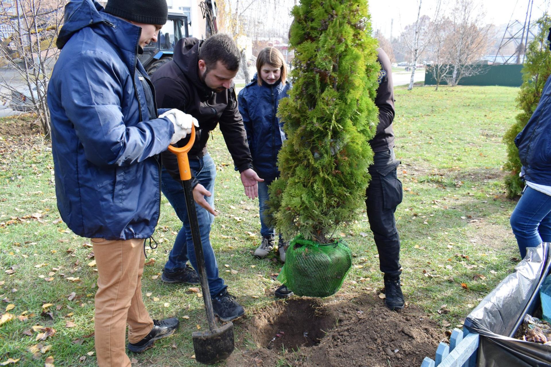 Висадження дерев неподалік дитячого майданчика у мікрорайоні «Сади-2»