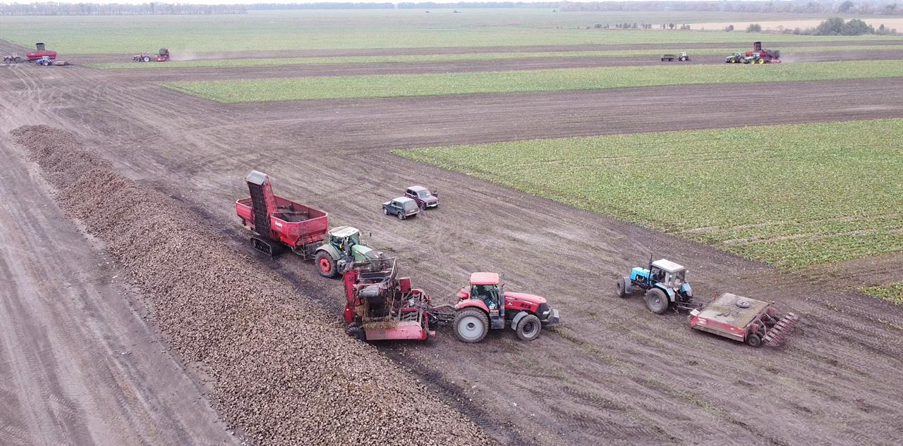 Техніка агрофірми звозить буряки до кагатів, звідки їх потім заберуть на цукровий завод