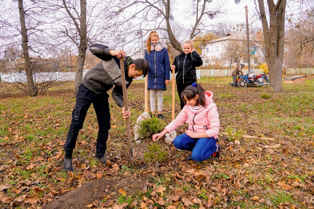 Школярі висадили хвойні деревця у центрі селища