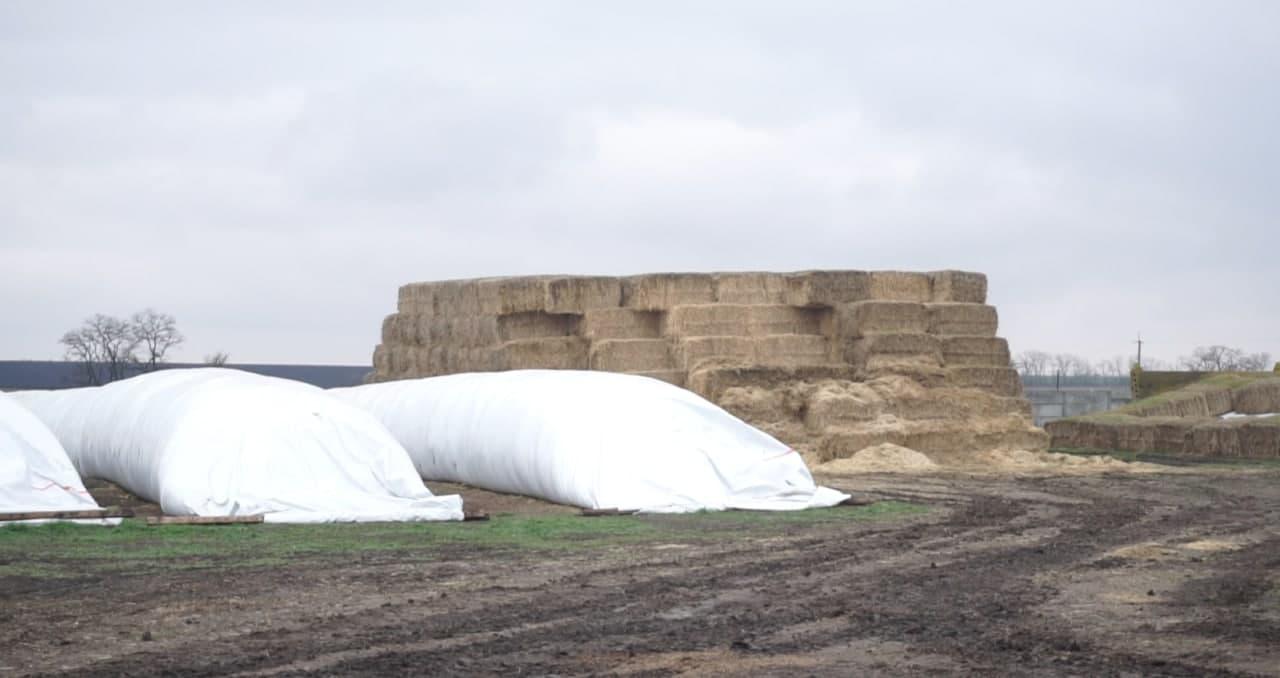 В агропромхолдингу «Астарта-Київ» дбають про якісний корм і солому для підстилки худобі