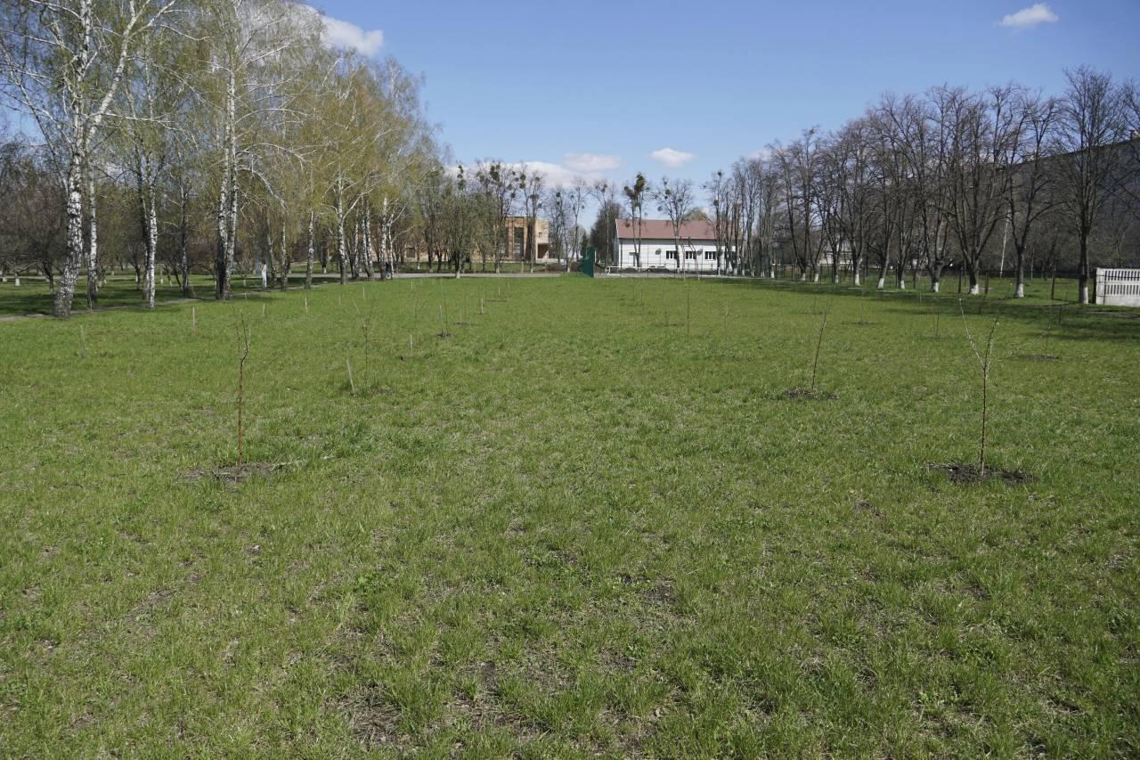 Завдяки Підйому учні Новооржицької школи висадили новий яблуневий сад