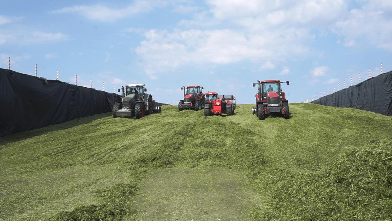 До потрапляння на ферми корм зберігається у павільйонах
