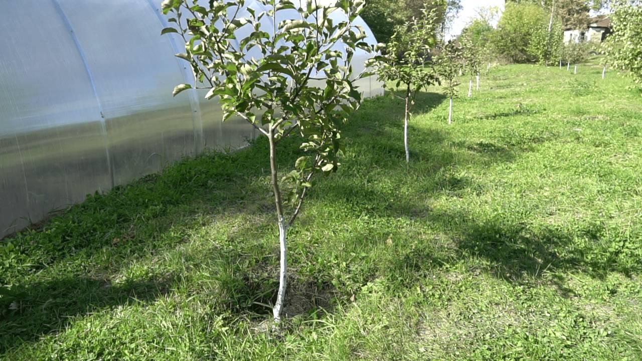 «Астарта-Київ» встановила на території Шенгурівської та Озерської шкіл теплиці та висадила яблуневі алеї